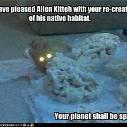 Alien Kitteh